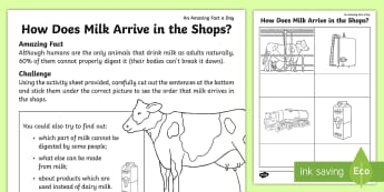 How Does Milk Arrive in the Shops? Worksheet / Activity Sheet - Amazing Fact Of The Day, worksheet / activity sheets, powerpoint, starter, morning activity, worksheet, April, m
