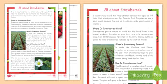All About Strawberries Differentiated Reading Comprehension Activity - strawberries, strawberry plants, strawberry farming, strawberry picking, strawberry plant life cycle