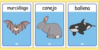 Spanish Animals Posters - spanish, animals, posters, display