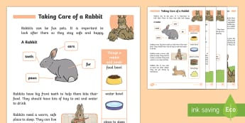 How To Care For Rabbits - Pets, pet, EYFS, KS1, take, care, look, after, family, member, members, vet, vet surgery, surgery, i