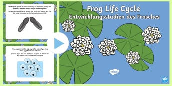 Life Cycle of a Frog PowerPoint English/German  - tadpole, pond, animals, minibeasts, EAL, German, English-German,,German-translation