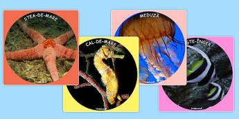 Animalele marine - Fotografii - animale marine, fotografii, pești, științe, imagini, informații, animale, apă, ocean, pești, materiale, materiale didactice, română, romana, material, material didactic