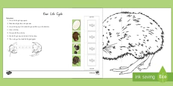 Kiwi Life Cycle Worksheet / Activity Sheet - KiwiLife, Cycle, NZ Native Birds, NZ Native animals, Sequence, Ordering, birds, flightless bird, wor