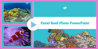 Coral Reef Photo PowerPoint - coral reef, photo, powerpoint, under the sea, australia