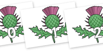 Numbers 0-50 on Scottish Thistles - 0-50, foundation stage numeracy, Number recognition, Number flashcards, counting, number frieze, Display numbers, number posters