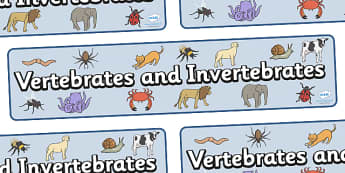 Vertebrates And Invertebrates Display Banner - vertebrate, invertebrate, banner, display, poster, sign, activity, vertebrate or invertebrate, game, matching, animals, animal, types, different