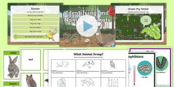 Identifying and Naming Animals Task Setter Powerpoint and Activity Work Pack - identifying animals, naming animals, task setter, powerpoint, word pack