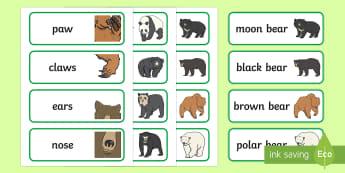 Bears Word Cards - EYFS, Early Years, KS1, Bears, pandas, teddies, teddy bears, Brown Bear Brown Bear, Going on a Bear