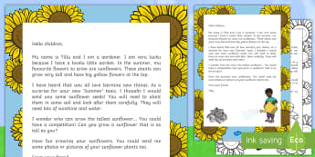 Growing Sunflowers Editable Letter - EYFS, KS1, Summer, plants, seeds, flowers, growth, growing, science, topic