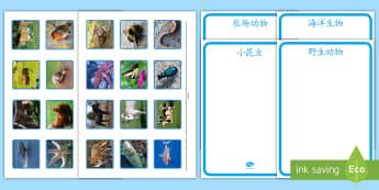 海洋/农场/野生动物/小昆虫图片分类练习 - 野生动物,农场动物,海洋生物,小昆虫,分类,动物图片,分类练习