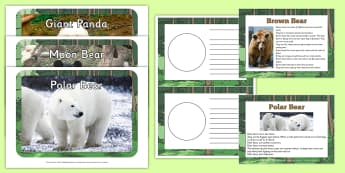 Facts about Bears EYFS Resource Pack - facts, bears, resource, pack