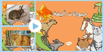 بوربوينت حيوانات أليفة - حيوانات، الحيوانات الأليفة، عربي، علوم، الحيوان، بورب