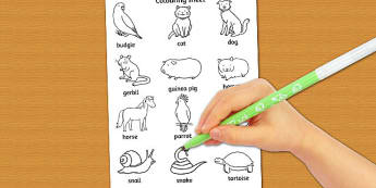 Pets Dictionary Colouring Sheet - pets, colour, sheet, dictionary