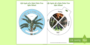 Life Cycle of a Date Palm Tree Spin Wheel Activity  - Plants and Growth, Growing, seeds, life cycle