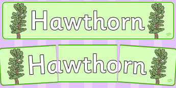Hawthorn Display Banner - tree, hawthorn, display, banner, woods, header, forest