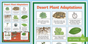 Desert Plant Adaptations Display Poster - desert plants, plants, plants poster, plants information, plant adaptations, plants and drought, des