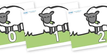 Numbers 0-50 on Sheep to Support Teaching on Pig in the Pond - 0-50, foundation stage numeracy, Number recognition, Number flashcards, counting, number frieze, Display numbers, number posters