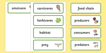 Food Chain Word Cards - food, chain, food chain, foods, cards, word cards, flashcards, producer, consumer, predator, cycle, different foods, animals, animal, eating, growing, consuming, producing, predating, nature, natural, predators, consumers, pro