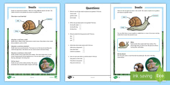 Snails Differentiated Reading Comprehension Activity - Snails, Shell, Snailery, Mollusc, Living Things,Irish