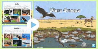 Diere Groepe PowerPoint - diere soorte, diere groepe, soogdiere, reptiele, amfibiee, voels, visse