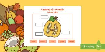 Anatomy of a Pumpkin Cut and Stick Activity Sheet