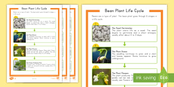 Bean Plant Life Cycle Differentiated Reading Comprehension Activity - Bean Plant, Life Cycles, Bean plant Life Cycle, Plant Life Cycle, Plants, Nonfiction, Informational