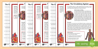 The Circulatory System Differentiated Reading Comprehension Activity - heart, blood, lungs, veins, arteries, human body, science