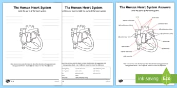 Animals including humans identify and name the main the human heart cardiovascular system labelling worksheet activity sheet worksheet ccuart Images