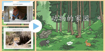 动物的家园信息幻灯片 - 动物,动物的生活环境,生活环境