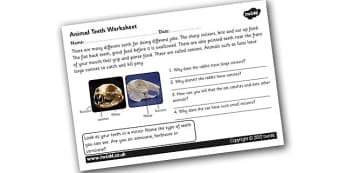Animal Teeth Worksheet - teeth, different teeth, animal teeth, teeth worksheet, what teeth are for, how animals use their teeth, animal skeletons, ks2