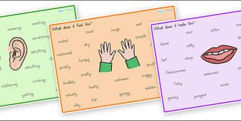 Senses Word Mat - senses, body, word mat, key words, words, mat