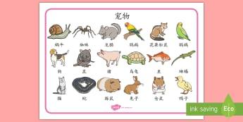 宠物词汇毯 - 宠物,动物,词汇,词汇毯,猫,狗,兔子,鼠