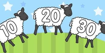Numbers 10-100 on Sheep - numbers, display numbers, sheep, 10-100