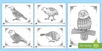 New Zealand Native Birds Mindfulness Colouring Pack - New Zealand Mindfulness, NZ Birds
