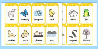 Flashcards : Mots illustrés -- Anglais LV1