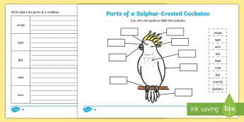 Parts of a Cockatoo Differentiated Activity Sheets - animal function, animal features, worksheets, worksheets, Australian Curriculum Biological sciences,
