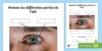 Feuille d'activités : La vue - Les sens (Niveau de base) - Sciences, eye, œil, yeux, vue, lid, lash, brow, paupière, sourcil, cil, iris, pupille, pupil,Frenc