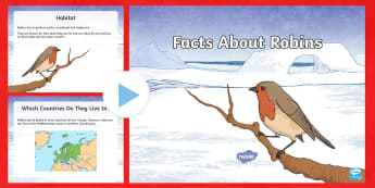 KS2 Facts About Robins PowerPoint - robin, robins, waitrose advert, garden birds,