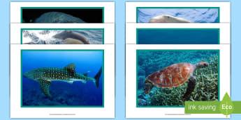 Arabian Gulf Marine Animal Display Photos - arabian gulf, arabian sea, UAE, UAE Marine Animals, UAE fauna