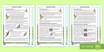 KS2 Garden Birds Differentiated Fact File - KS1 & 2 RSPB Big School's Birdwatch (3 Jan-17 Feb 2017), RSPB, school, bird, bird watch, fact file,