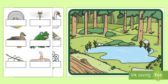Pond Poster with Editable Labels - Pond Unit, Customizable Poster, Early Childhood Science, Pond Lifecycle, Large Group Activity