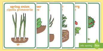 Fruit and Vegetable Plants Display Posters English/Italian - Fruit and Vegetable Plants Display Posters - fruit and vegetable plants display posters, fruit and v