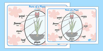 Parts of a Plant Word Mat Arabic Translation - arabic, parts of a plant, word mat, word, mat, parts, plant