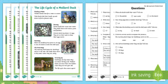 Brenda's Boring Egg: Life Cycle of a Duck Differentiated Reading Comprehension Activity - twinkl originals, fiction, KS1, EYFS, Non-fiction, inference, deduction, Science reading,
