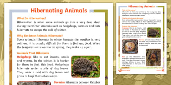 Don't Hog the Hedge! Hibernating Animals Differentiated Fact File - Twinkl Originals, Fiction, Autumn, Hiberate, Woodland, Animals, KS1, Reading, Comprehension, Non-Fic
