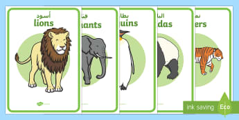 Zoo Animal Enclosure Role Play Signs Arabic/English - zoo, at the zoo, zoo enclosure signs, zoo resources, zoo animals, animals, zoo ticket, the zoo, livi