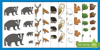 Forest and Woodland Size Ordering - EYFS, Early Years, KS1, Key Stage 1, Forests, Woodlands, Woodland animals, British Wildlife, Maths,