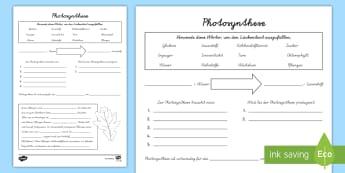 Fantastisch Photosynthese Diagramme Arbeitsblatt Zeitgenössisch ...