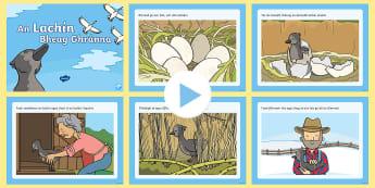 The Ugly Duckling PowerPoint Gaeilge - fairy tales, An Lachín Bheag Ghránna, duckling, stories, gaeilge, Irish