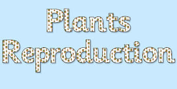 'Plants Reproduction' Display Lettering - plants reproduction, plant reproduction, plants reproduction lettering, plants reproduction display, reproduction